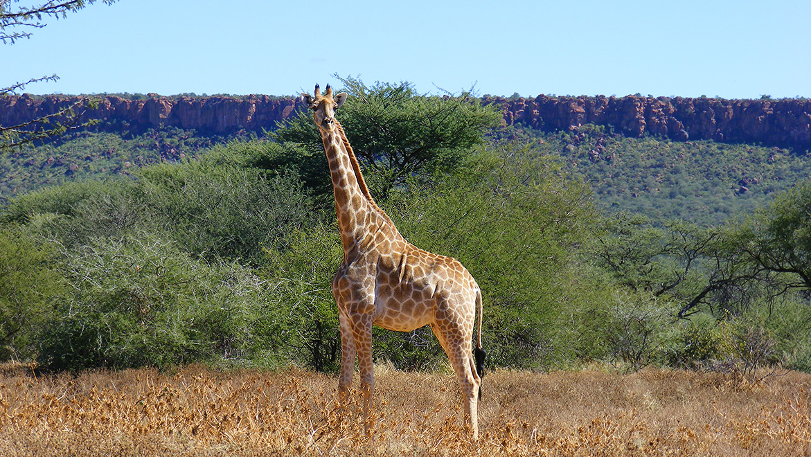 Waterberg Wilderness Nature Conservation